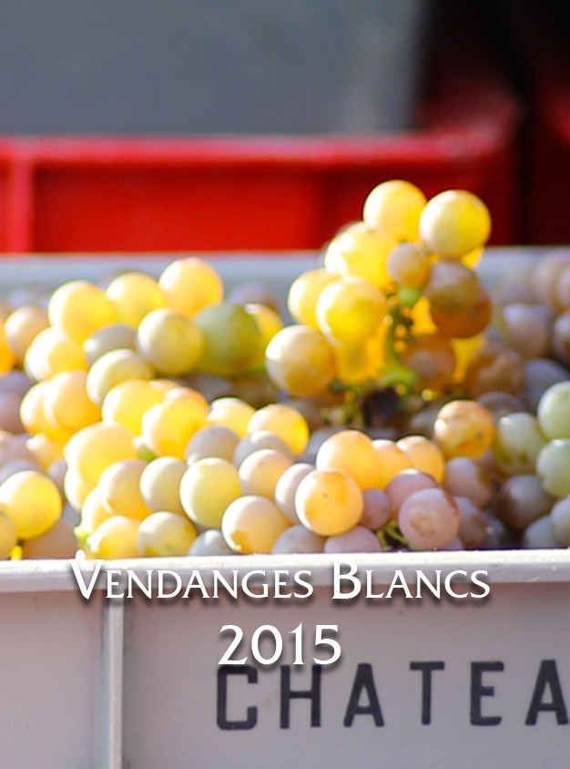 Vendanges des blancs 2015